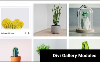 7 Beautiful Divi Gallery Modules made for the Divi Den Pro Layout Library